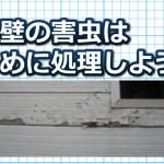 外壁の害虫は早めに処理しよう!【発生する理由と対策方法】